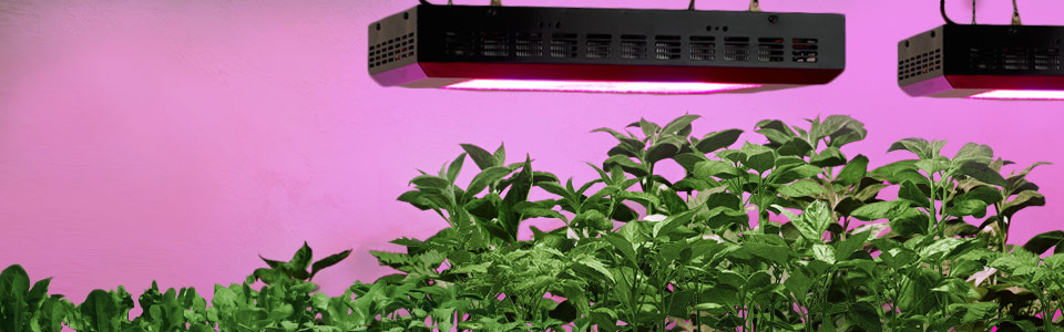 How to grow peppers indoor under led grow lights lxp - Plant growing lamps ...