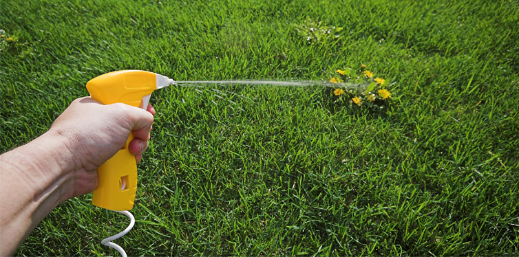 LXP - Lifexpe - Backyard Garden Pests – What To Look For And How To Prevent Infestation